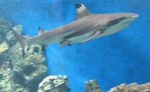223-NOULEA-Aquarium.jpg