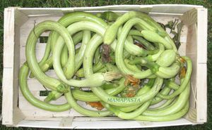 COURGES-SERPENT.JPG