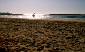 playa.png