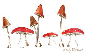 illustration-champignons.jpg