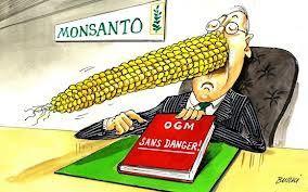 OGM 6