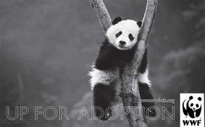 wwf-panda.jpg