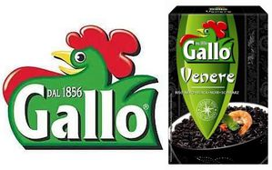 gallo veneré
