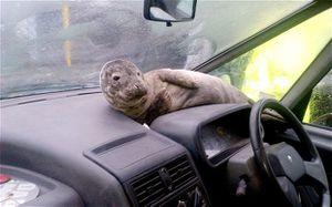 seal-car_2464304b.jpg