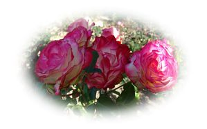 roses-rouges.jpg