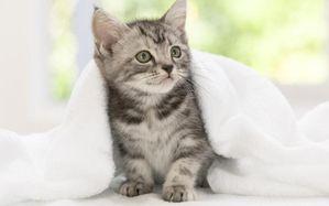 chaton.jpg