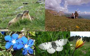 Petit souvenir du Diois Vercors Mai 2011