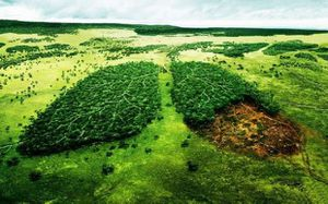 Creative_Wallpaper_Deforestation_patients_lungs_025769_.jpg