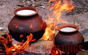 Pongal Festival Wishes-Pongal-496 big