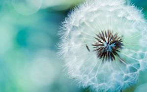 Fleur-soleil.jpg