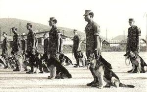 Sentry-Dog-Formation-Vietnam-War-2.jpg