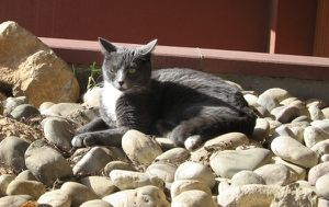 avantprintemps5.JPG