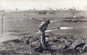 trinidad-tobago-travailleurs-sur-le-lac-la-brea