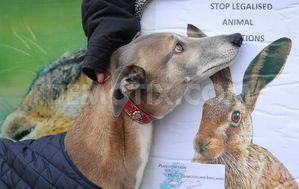 1359765539-hare-coursing-demonstration-in-dublin_1765329.jpg