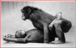 bonobo-lov-01.JPG