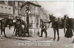Chevaux_grand_place_1.jpg
