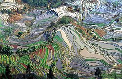 250px-Terrace_field_yunnan_china.jpg