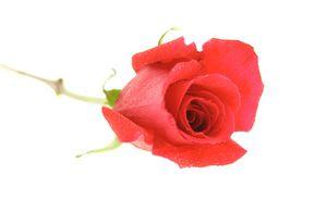 rose io