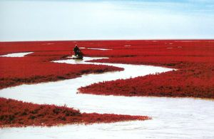 plage%20rouge%20liaoning%202(1)