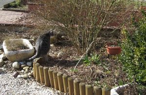 avantprintemps4.JPG