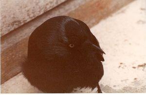 Lewis--annees-1980--detail.jpg
