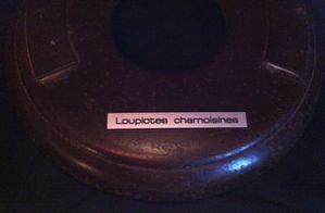 loupiotes-chamoisines-202.jpg