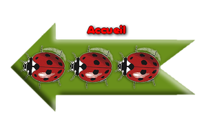 acceuil.png