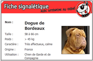 Dogue-2.png