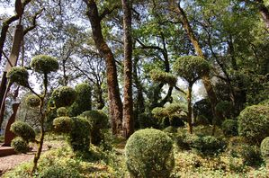 Dordogne jardins de Marqueyssac (11)