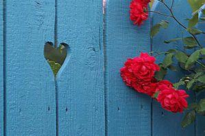 Porte_bois_bleu_coeur_roses_rouges.jpg