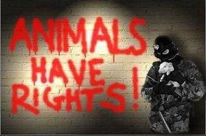 Un statut pour les animaux