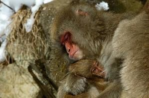 3-macaques-nature-magazine-228289.jpg