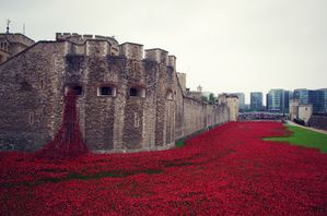 poppy-installation-London-Tower-4.jpg