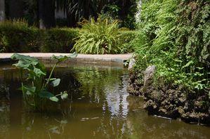 Seville Jardins de l'Alcazar (4)