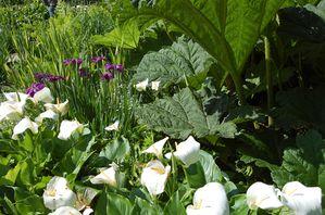 Bretagne Jardin du Kestellic (6)