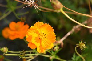 fleurs 0692-copie-1
