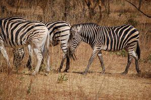 Reserve-de-Bandia-Senegal-107.jpg