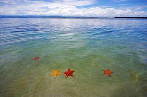 étoiles de mer.jpg