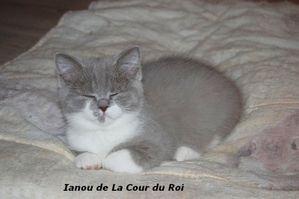 Chatons-au-21-01-2014-3541.JPG