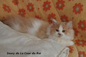 Chatons-au-21-01-2014-3585.JPG