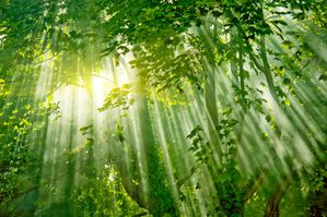 Amazon-Forest-Light.jpg