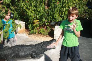 Everglades 2435
