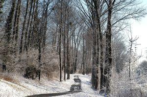 neige 3 2010