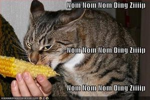 funny-pictures-cat-eats-an-ear-of-corn-with-typewriter-soun.jpg