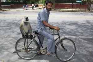 0523-dmonkey-dispatches-india-Monkey-Trainer_full_380.jpg