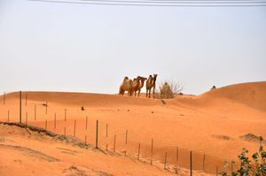 2011-Kamel 3