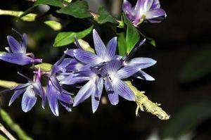 Orchideenschau (22)