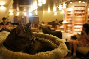 neko-cafe-chat-japonais-632x420.jpg