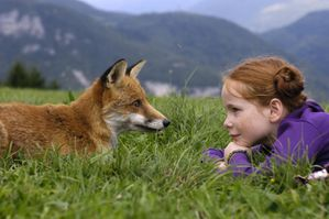 le-renard-et-l-enfant-le-renard-et-l-enfant-the-fox-and-the.jpg