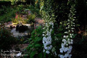 delphinium, jardin japonais DSC 0050